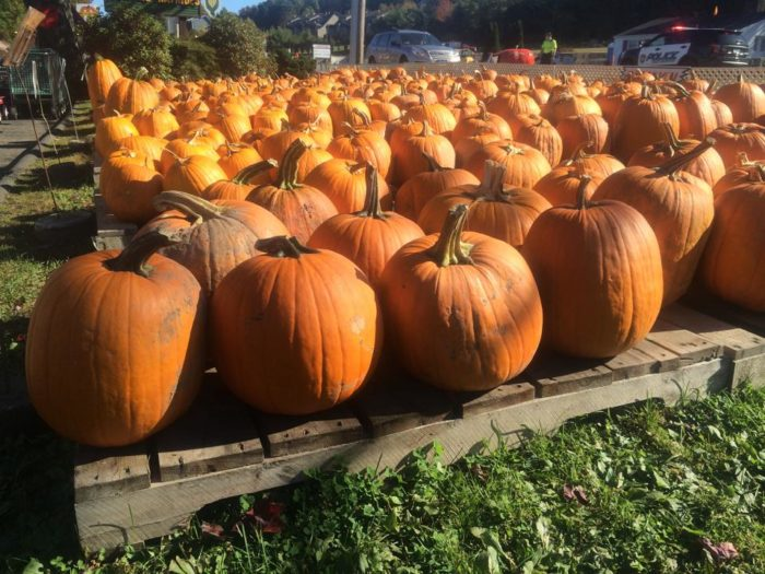 Take the mile-long hay ride to see the Pumpkinheads living in the woods before starting the search for the pumpkin of your dreams. They also have plenty of gourds and apples!