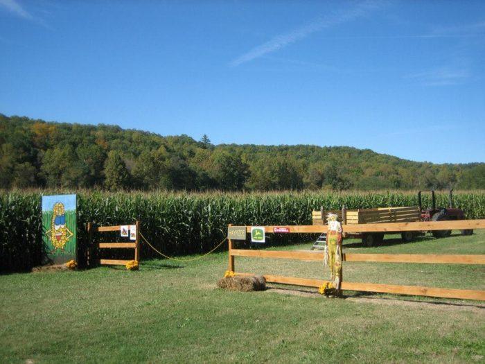 10. Buck's Corn Maze— 1923 New Hope Rd, Dawsonville, GA 30534