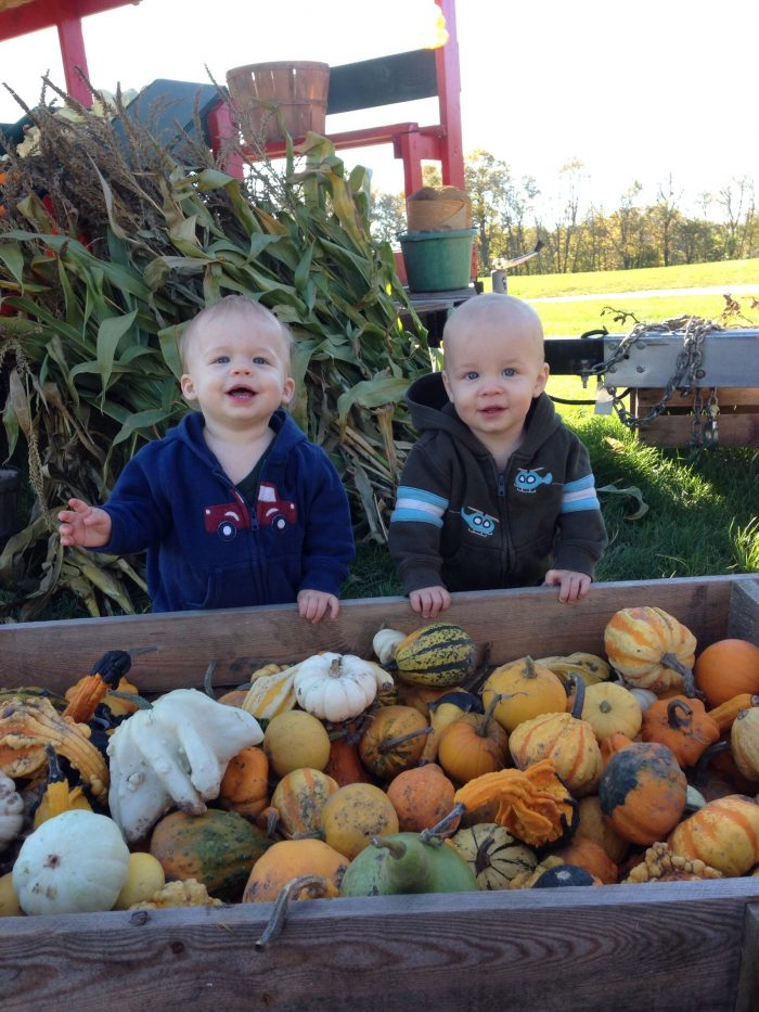 There are plenty of places to pick the perfect pumpkin or gourd.