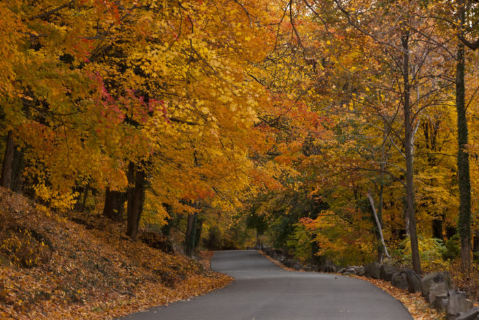 With some of our country's best foliage falling in the upper right hand corner of America, it's no surprise that New Jersey made this list.