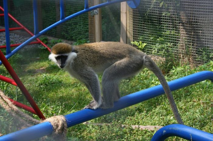 Watch the residents, many of whom have enrichment toys, go about their daily lives.