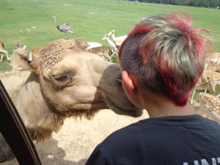 The camels are extremely sweet and love to get fed!