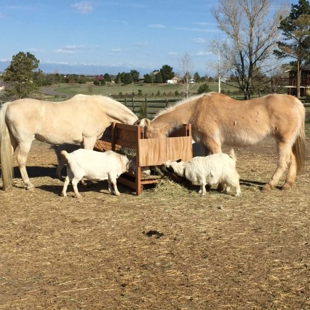 What types of animals can you expect to find at the Edwards Rescue? For starters, there are numerous large farm animals, such as horses and llamas...