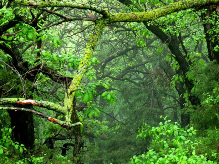 These forests are lush with a huge variety of plants and animals, and have served as a natural oasis for hundreds of years.