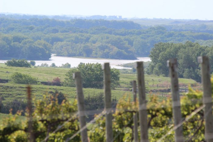 Visitors can look out over the grapevines and for miles beyond.