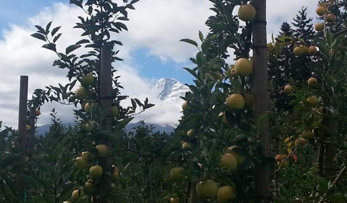 3. Pick Apples
