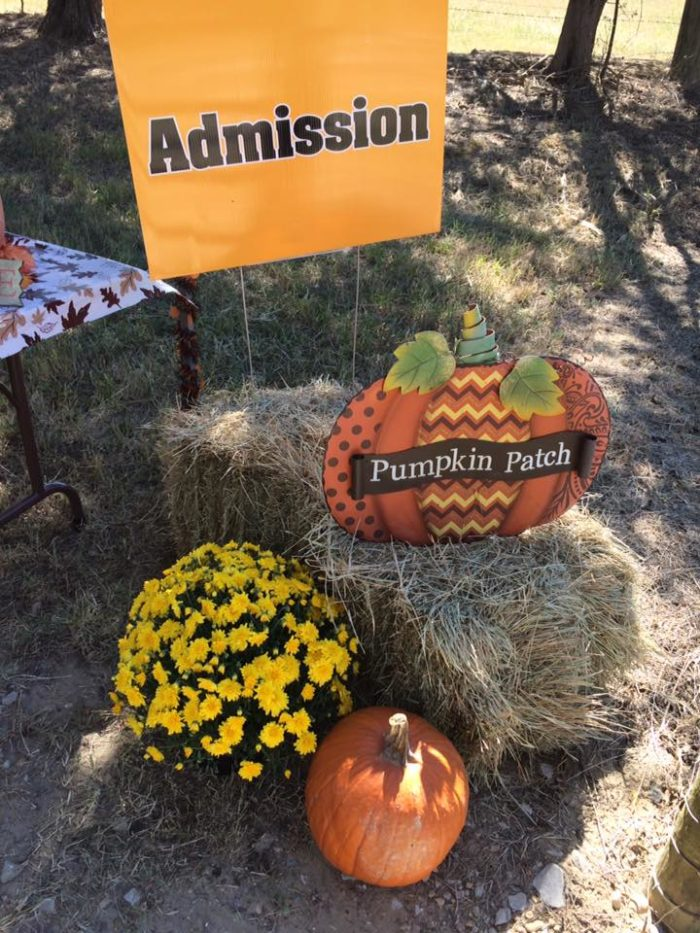 Visit Tupelo Buffalo Park and Zoo in October and you'll be in for an extra treat. The park's annual pumpkin patch, corn maze, and haunted trail will be opened until the end of the month.