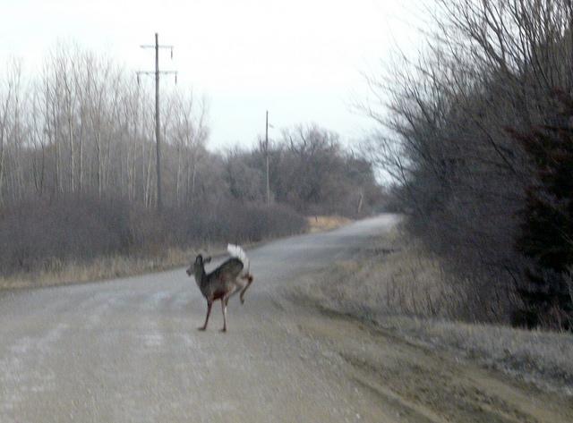 12. Deer