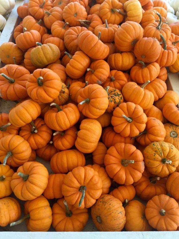 3. 12 South Pumpkin Patch - Nashville