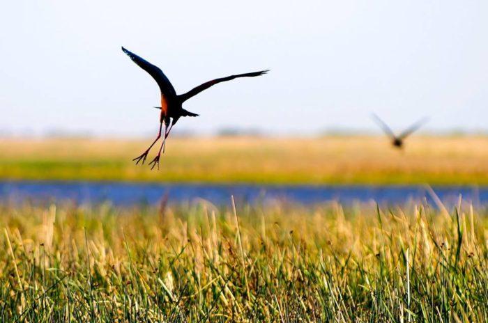 9. Wetlands & Wildlife National Scenic Byway