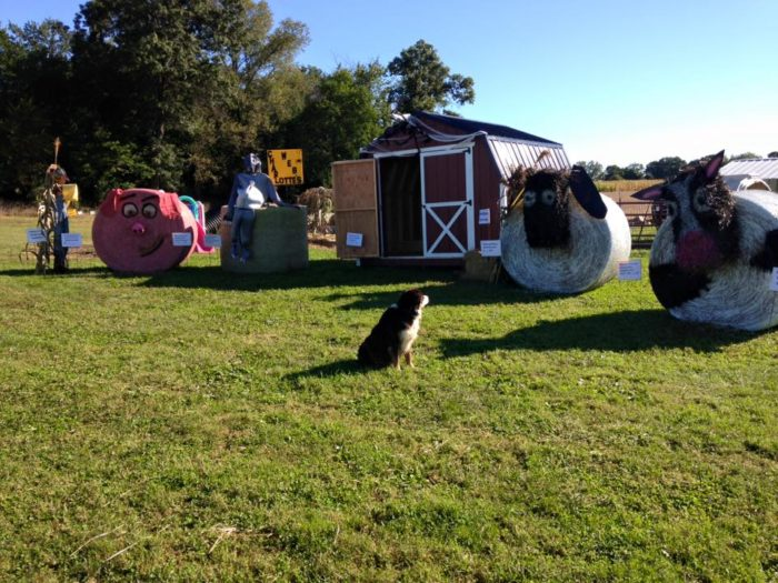 Of course, no autumn day trip is complete without a trip to the local pumpkin patch, and Marshall's got a lovely one nearby: make a stop at Bosserd Family Farm for some wholesome fall fun.