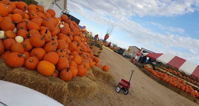 9. Miller Farms, Through Mid November