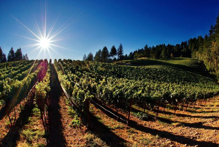 This trail begins when you stop by one of the 32 farm wineries to pick up your passport. Then get exploring!