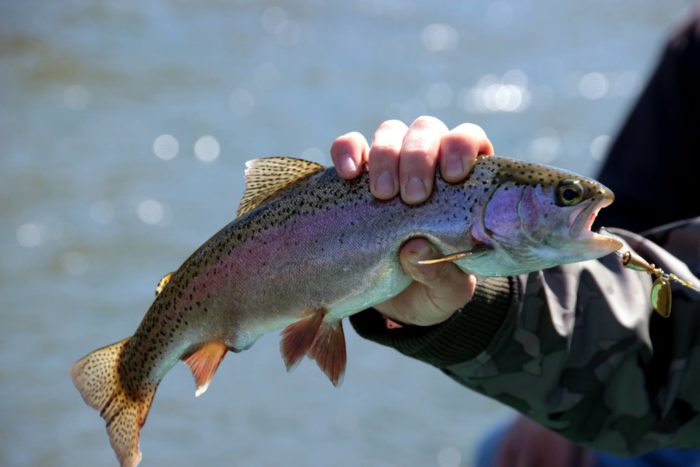 The main attraction, of course, is the trout fishing.