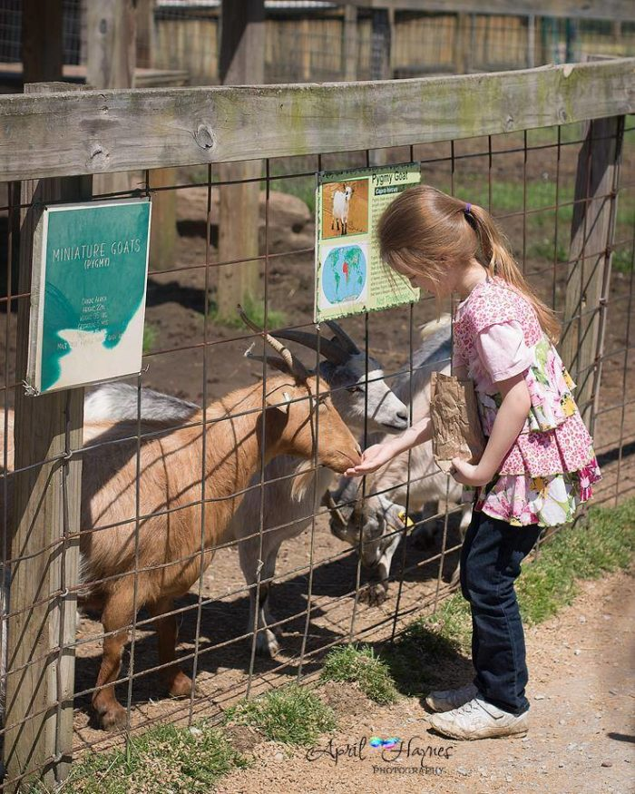 The petting zoo also offers a chance to get interactive with the animals.