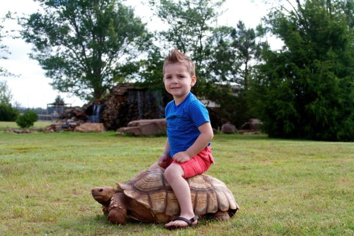 Ride the turtles.
