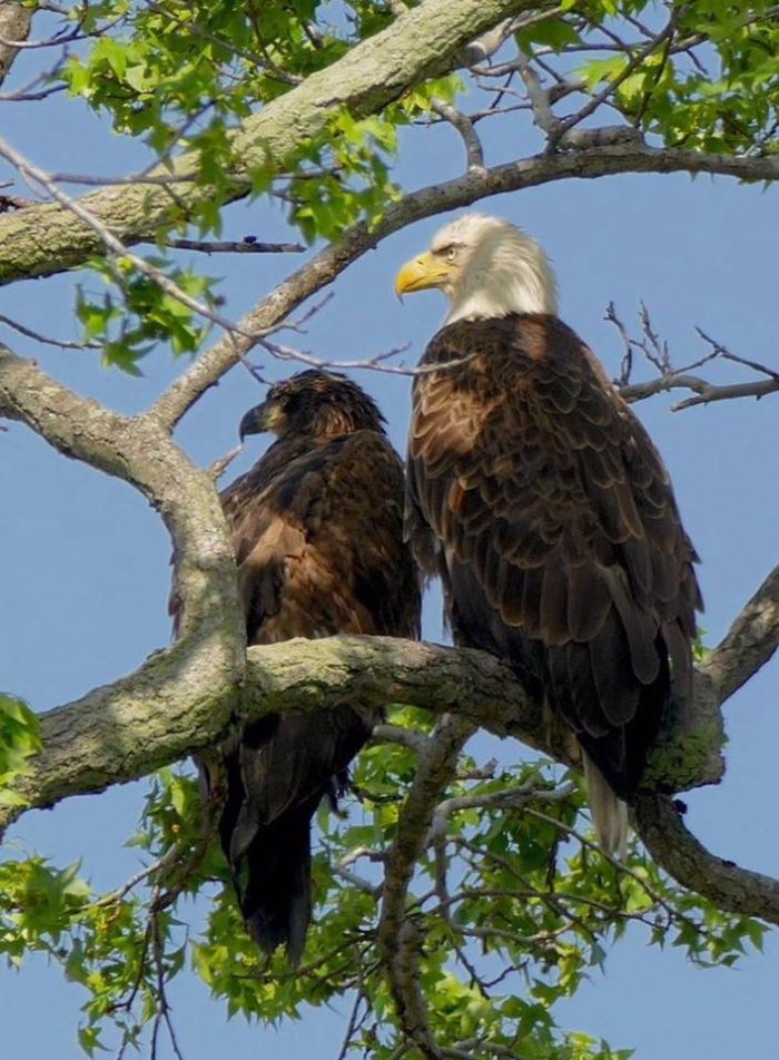Bald eagles make their home at Bombay Hook, so keep your eye on the treetops as well as the wetlands.
