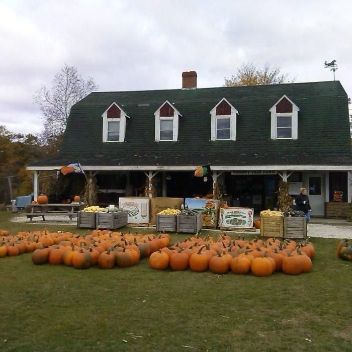 3. County Fair Farm, Jefferson
