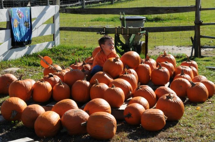 The pumpkin festival is a favorite event this time of year.