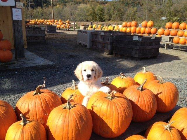 2.  Gaines Farm and Kennel - 6343 Coolidge Highway, Guilford