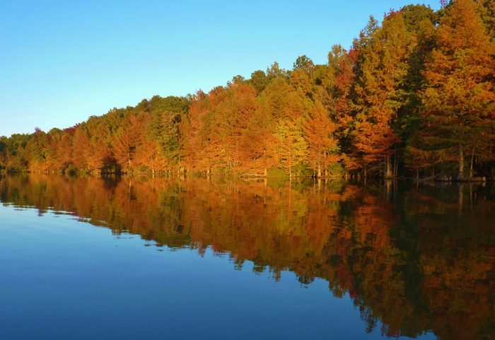 Fall is a wonderful time to visit Felsenthal National Wildlife Refuge - the hardwood foliage is spectacular.
