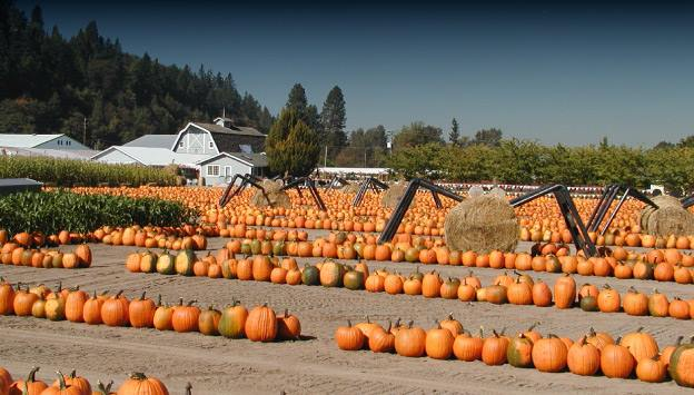 8.  Spooner Farms, Puyallup