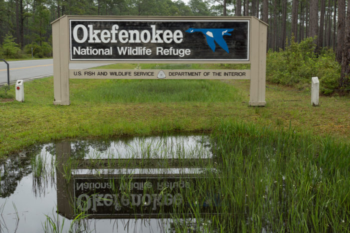 It's fairly unlikely that you'll come across another human being in the Okefenokee Swamp.