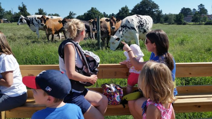 You can pet the cows and say hello or moo. It's safe and fun for the whole family.