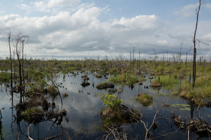 This vast, blackwater swamp is a 38-mile by 35-mile spread of islands, lakes, bald cypress, and tall prairie grass.