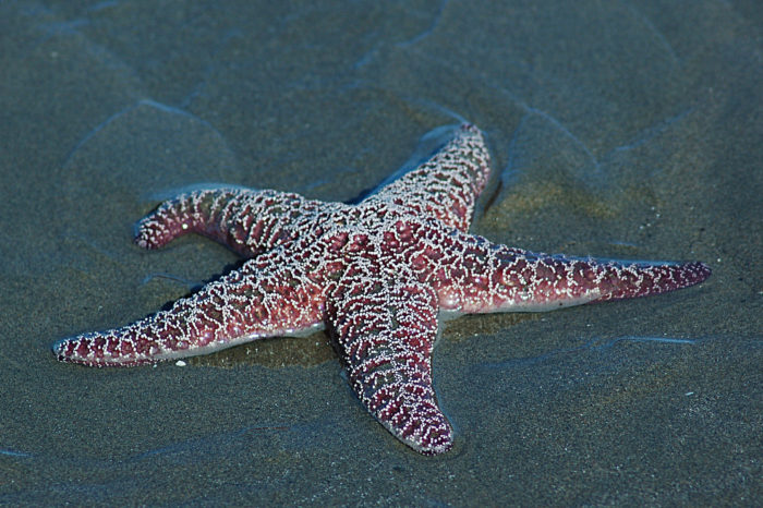 At low tide, you'll find starfish, anemones, barnacles, and more in colorful tide pools or clinging to the large rocks.