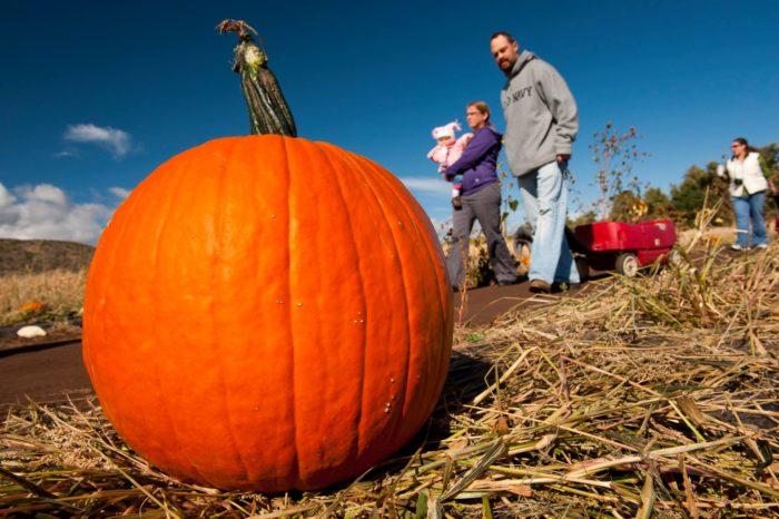 3. Pumpkin Festival at Chatfield Farms, October 7th-9th
