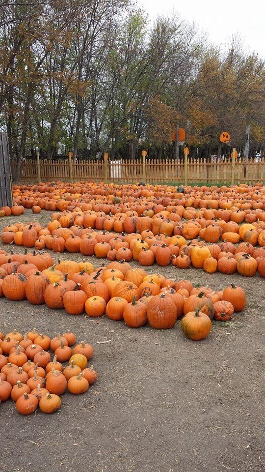 4. Dakota Carriage Co. Pumpkin Patch - Fargo