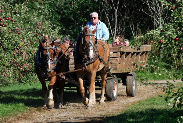 While you're there, be sure to check out the other attractions the farm has to offer, like hayrides.