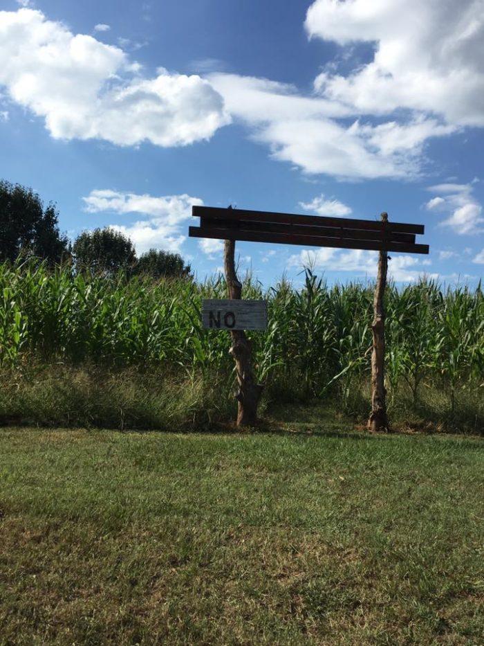 6. Five Forks Corn Maze—562 Old Andersonville Rd. Hartwell, GA 30643