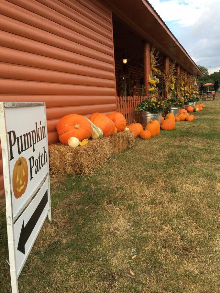 2. Motley's Pumpkin Patch and Tree Farm (Little Rock)