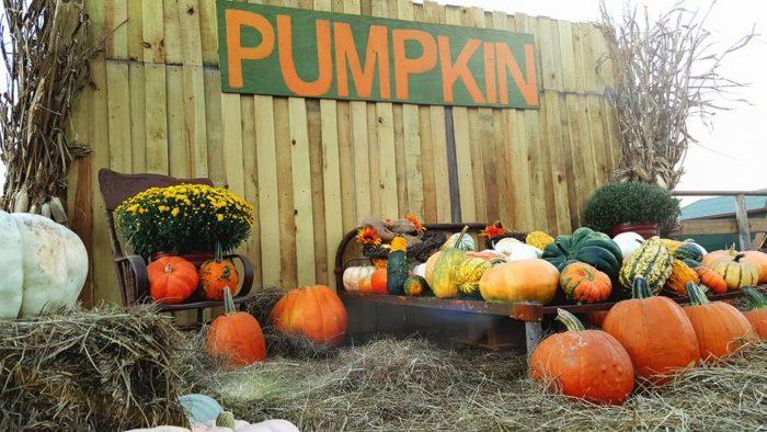 3. Scott Pumpkin Patch (Scott)
