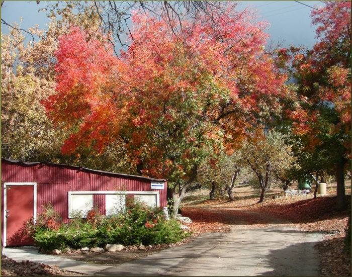 Visit Snow-Line Apple Orchard and Winery - one of many orchards in this little town.