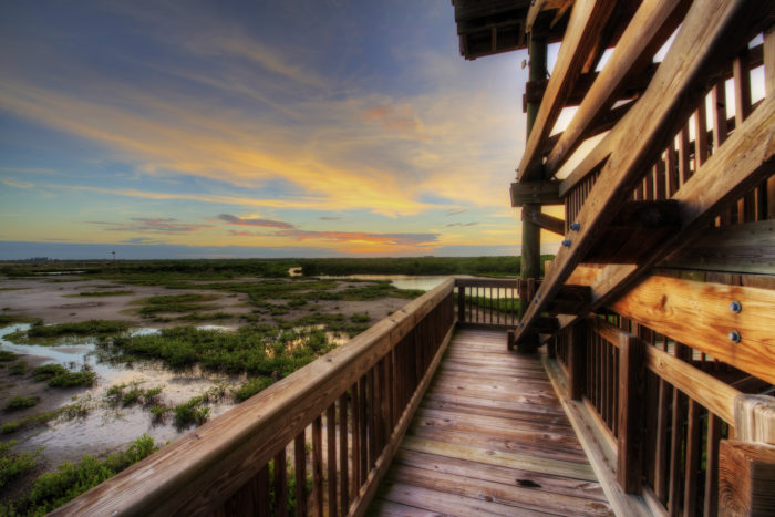 One highlight of the park is the observation tower that has stunning views of the salt marsh and Tampa Bay.