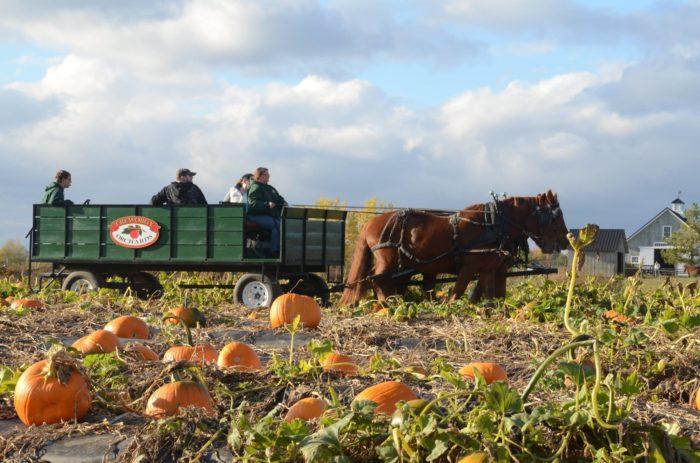 8. Take the horse-drawn farm tour at Treworgy Family Orchards