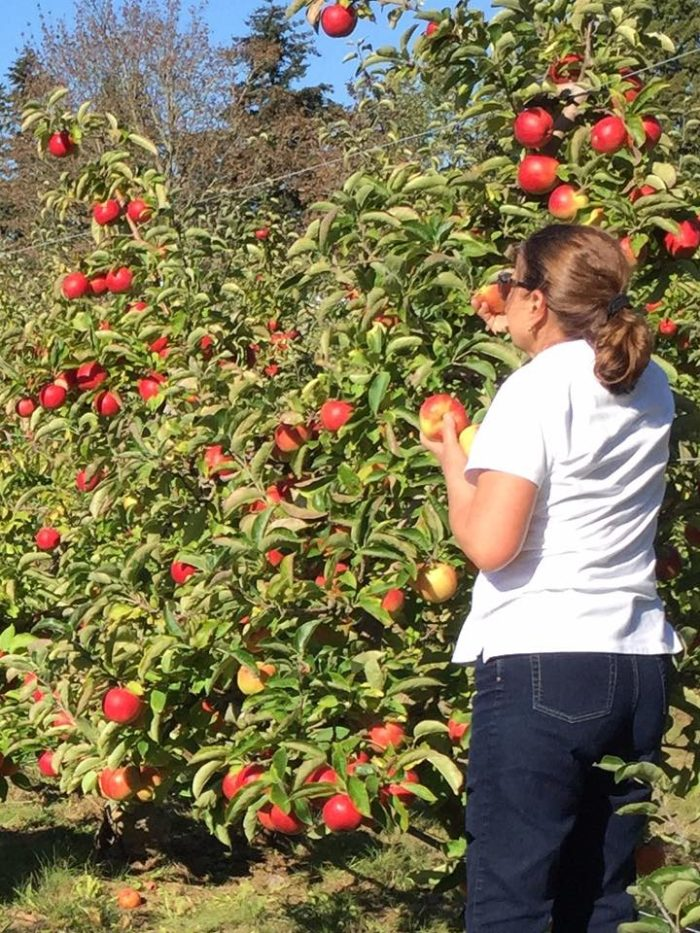 10 Charming Apple Orchards In Washington State