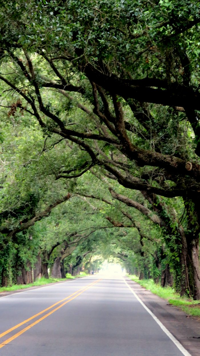The tree tunnel here was a place that many were hoping wasn't ruined during Hurricane Katrina.