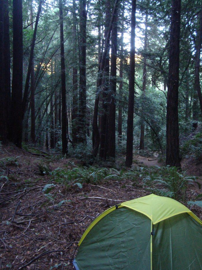 6. Redwood Regional Park