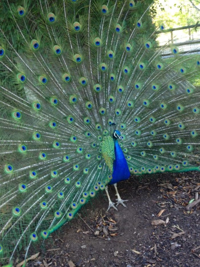 And you never know who you may run into at the Aviary!  Beauty is around every corner at White Fence Farms.