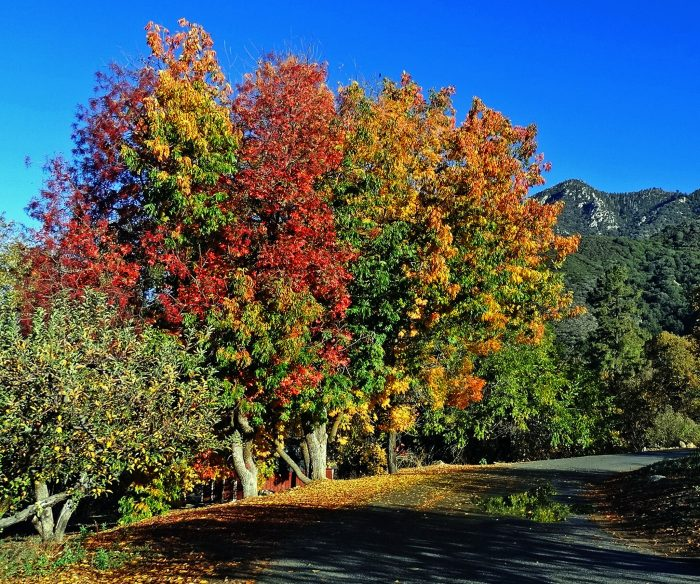 Drive the country roads for some spectacular fall foliage.