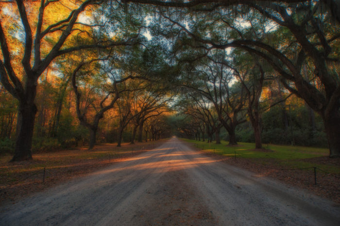 Wormsloe Historic Site is a magical avenue, hugged tightly by live oaks dripping with beautiful Spanish moss.