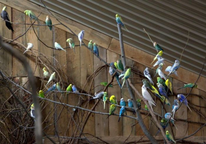 Walk through the aviary and visit with the many colorful residents.