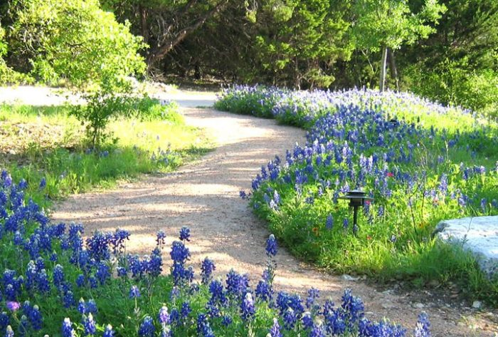 The wildflowers will make your Texan heart soar.