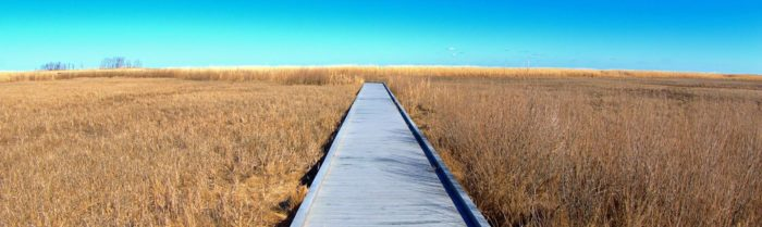 The refuge has walking trails throughout - some are boardwalks, some are dirt trails.