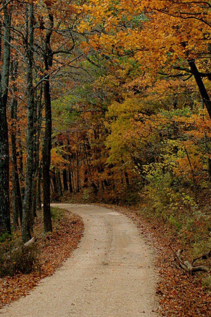 9. The Road to Whitaker Point (Gravel Road #9560)