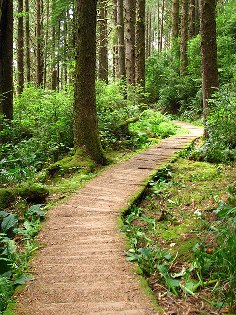 The Fern Canyon trail starts on this magical path that will immediately begin to astound you with all the beauty.